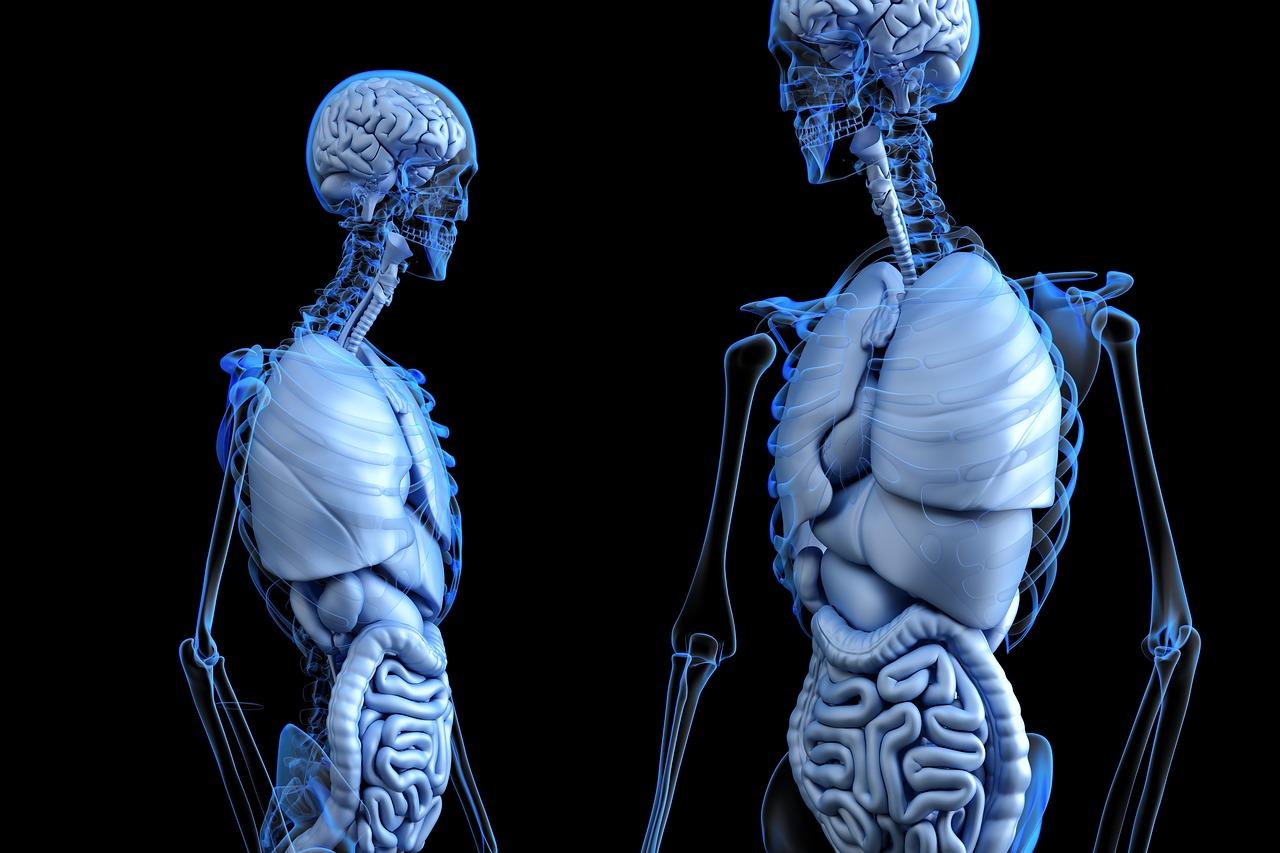 Cómo se hace un trasplante de hígado