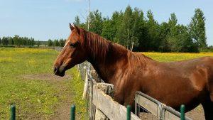 equinoterapia, hipoterapia, terapia con caballos